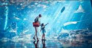 三亚 · 亚特兰蒂斯失落的空间水族馆【亲子水世界,探寻神秘文明】